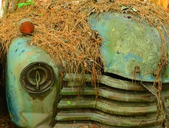 Hiding out under the straw.... (tvdflickr) Tags: old classic abandoned car nikon rust rusty vehicle junkyard pinestraw d610 oldcarcity whitegeorgia photosbytomdriggers photobytomdriggers thomasdriggersphotography