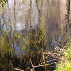 A la Monet (fransje 2103) Tags: water canon reflections square paysbas schiedam 500x500 natureabstract bouch