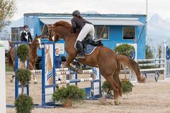 DSC09099_s (AndiP66) Tags: springen hildisrieden reitsportcenter estermann traselinge 2016 september pferd horse schweiz switzerland kantonluzern cantonlucerne concours wettbewerb horsejumping equestrian sports springreiten pferdespringen pferdesport sport sony sonyalpha 77markii 77ii 77m2 a77ii alpha ilca77m2 slta77ii sony70400mm f456 sony70400mmf456gssmii sal70400g2 andreaspeters luzern ch