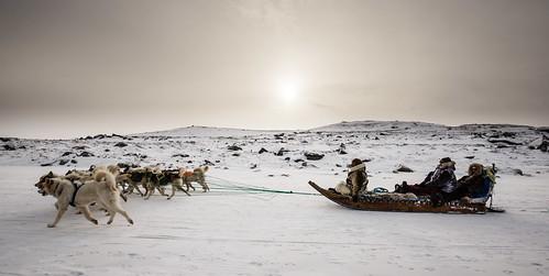 Dog sled in Kangerlussuaq