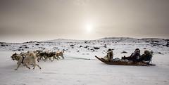 Dog sled in Kangerlussuaq (bredsig) Tags: winter dog snow cold ice animal wolf driving transportation greenland sled sleddog lowsun gl kangerlussuaq snderstrm qeqqata