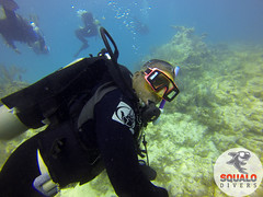 Scuba Dive in Key Largo-April 2016-22 (Squalo Divers) Tags: usa divers key florida scuba diving padi ssi largo squalo
