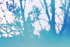 blur-dreamy-texture-texturepalace-19 (texturepalace) Tags: blur color leaves cc creativecommons dreamtextures texturepalace blurtextures