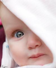 Ruby (Wayne Cappleman (Haywain Photography)) Tags: portrait baby colour photography woodlands wayne hampshire ruby farnborough southwood haywain cappleman