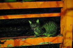 Today's Cat@2016-01-18 (masatsu) Tags: cat pentax cc100 catspotting mx1 thebiggestgroupwithonlycats