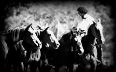 Desde otros tiempos (Eduardo Amorim) Tags: horses horse southamerica argentina criollo caballo cheval caballos cavalos pferde herd cavalli cavallo cavalo gauchos pferd ayacucho chevaux gaucho cavall  amricadosul gacho amriquedusud provinciadebuenosaires  gachos  sudamrica suramrica amricadelsur sdamerika crioulo caballoscriollos criollos  tropillas buenosairesprovince americadelsud tropilhas tropilla crioulos cavalocrioulo americameridionale tropilha caballocriollo eduardoamorim cavaloscrioulos