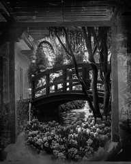 Spring-Floral-Show (laxwings) Tags: bridge flowers blackandwhite 3 floral garden tulips session japenese