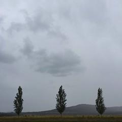 'Summer In Australia' - January, 2016 (aus.photo) Tags: trees summer wet rain landscape grey rainyday overcast australia canberra act cbr australiancapitalterritory campbellpark ausphoto