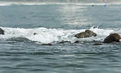 Small Waves (JooPedro64) Tags: sea mar nikon rocks waves 70300mm ondas dx rochas d7200
