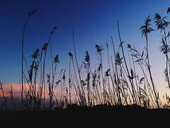 STAGNO (T.o.r.e) Tags: sardegna tramonto natura platamona stagno