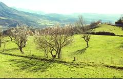 Les Hautes Seynes (26) (Sebmanstar) Tags: travel light france color alpes french landscape photography amazing europa europe pentax explore provence paysage campagne couleur ballade sud exterieur provencealpesctedazur
