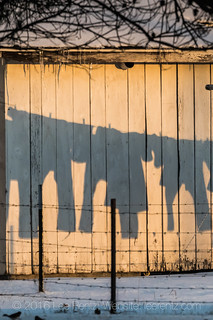 Amish Clothing Casting Shadows while Drying Outside in Winter