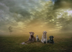 Dogs and Cats (Akkarapat) Tags: sunset portrait sky pet pets sun color sunshine animal photoshop sunrise sundown dream dramatic dreaming fantasy sunbeam