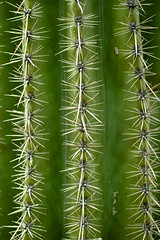 Ouch (Brian PDX) Tags: life park old travel blue summer arizona cactus sky usa plant abstract hot southwest west flower green tourism nature beautiful yellow fauna fun gold succulent pointy desert tucson background sandy barrel rocky sharp national caution western spike saguaro emory spines sonoran succulents genus ferocactus droughttolerant xeriscaping biznaga longspined covilles emoryi