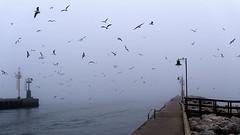 Lost In The Fog (gus_BO) Tags: sea lighthouse faro pier dock mare seagull odyssey 1500 molo gabbiani cesenatico florencethemachine nikond700 56 240700mm longandlost