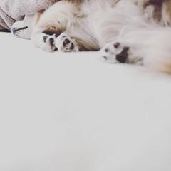 Fujifilm X70 : March 7, 2016 (takuhitofujita) Tags: flickr 猫 犬 動物 ポートレート 人々 eyefi eyeficloud fujifilmx70