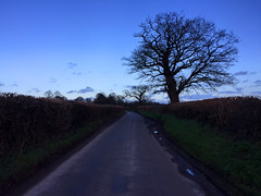 Hampshire Country Lane (Marc Sayce) Tags: winter england tree english oak country hampshire lane hedgerows alresford