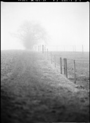 Misty Path (Lars_Holte) Tags: pentax645 645 645n 6x45 smcpentaxfa 200mm f40 rollei superpan superpan200 mediumformat film analog analogue blackandwhite classicblackwhite monochrome filmforever filmphotography d76 larsholte homeprocessing denmark danmark kokkedal fog mist 200iso rolleisuperpan200 120 depthoffield dof pentax 120film