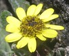 IMG_0977 Flower (John Steedman) Tags: africa flower trek kenya afrika kenia afrique eastafrica mountkenya ostafrika 非洲 アフリカ ケニア африка afriquedelest أفريقيا кения 肯尼亚 東アフリカ شرقأفريقيا 东部非洲