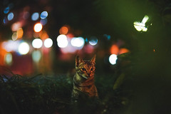 (Tridentz | ) Tags: light eye look night cat hongkong eyes bokeh sony voigtlander meow neko alpha f18  a7   vm  75mm    kittysuperstar