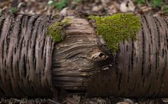 L1096345 (peterbastingsfotografie) Tags: staatsbosbeheer middenlimburg demeinweg peterbastings dedoort leica35mmsummicronmasphf20 middelsgraaf susterenecht