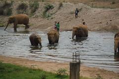 Elephant Crossing (kcosgrove) Tags: mai chiang