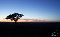 Visite a Herdade dos Grous e sinta o nosso crepsculo! (herdadedosgrous) Tags: orange tree portugal nature clouds landscape twilight natureza natur laranja paisagem nuvens alentejo rvore ocaso beja crepsculo naturephotography corktree sobreiro albernoa natureactivities herdadedosgrous