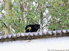 Residents (Rick & Bart) Tags: nature cat canon garden feline pussy tuin wildcat rickbart sintlambrechtsherk thebestofday gnneniyisi rickvink eos70d