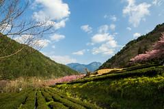 20160306-DSC_6008 (Kay's...) Tags: cherryblossom sakura   wuling wulingfarm