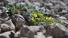 _IGP4065 (carmenb122) Tags: arches yellowstone nationalparks grandteton canyonland 2015vacation