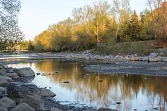 IMG_7933 (Scott Martin Calgary) Tags: ca trees sunset canada calgary reflections alberta princesisland bowriver princesislandpark