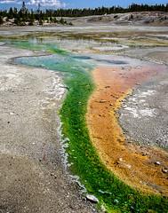 Ribbon of Color (bob hindley) Tags: minerals hotsprings yellowstonepark