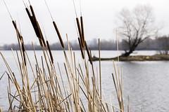 DSC_4807 (kabatskiy) Tags: city urban lake nature landscape spring dump minimal marsh abstracts