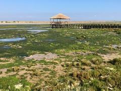 IMG_4477 (hofsteej) Tags: lagoon morocco maroc sultana oualidia