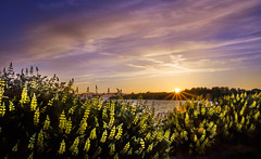 Welcome to the Summer :) (kalpurush :)) Tags: sunset sky cloud canada nature field skyline landscape bc outdoor victoria vancouverisland serene