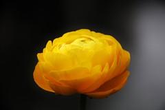 Flower - Art (Hugo von Schreck) Tags: flower macro art blume blte f13 greatphotographers tamron28300mmf3563divcpzda010 canoneos5dsr hugovonschreck
