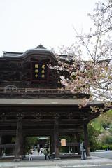20160410-DSC_7830.jpg (d3_plus) Tags: sky plant flower history nature japan trekking walking temple nikon scenery shrine bokeh hiking kamakura fine daily bloom  28105mmf3545d nikkor    kanagawa   shintoshrine   buddhisttemple dailyphoto sanctuary   thesedays kitakamakura  28105   fineday   28105mm  holyplace historicmonuments  zoomlense ancientcity        28105mmf3545 d700 281053545 nikond700  aiafzoomnikkor28105mmf3545d 28105mmf3545af aiafnikkor28105mmf3545d