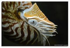 Oasi-S.Alessio-25-04-2016_023 (fdpdesign) Tags: italy macro nature nikon natura animali d800 pavia oasi 2016 salessio nikon105micro