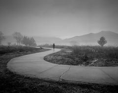 Curve into the Mist (johnsteelephoto) Tags: trees blackandwhite mist mountains monochrome misty curve pentax6x7 blackandwhitefilm pentax67 doomoolmeori