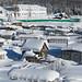 Muita neve sobre as casas