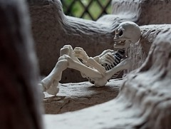 (claudine6677) Tags: pose skeleton skull bones skelett knochen gerippe