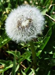 DSC_0036_796 (2) (Derek Shore) Tags: flower beautiful grass wow cool nikon zoom nikond3300 d3300