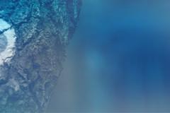 blur-dreamy-texture-texturepalace-6 (texturepalace) Tags: blur color leaves cc creativecommons dreamtextures texturepalace blurtextures