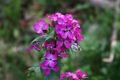 Flower (Hugo von Schreck) Tags: flower macro outdoor pflanze blume makro f13 onlythebestofnature tamron28300mmf3563divcpzda010 canoneos5dsr hugovonschreck