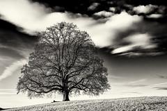 Good Morning, Beauty... (Ody on the mount) Tags: bw monochrome silhouette de deutschland pflanzen himmel wolken sw bume badenwrttemberg schwbischealb reutlingen morgenlicht fototour anlsse solitr