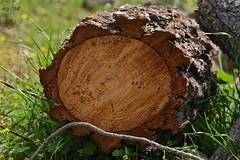 IMG_0978PCF (egretta12) Tags: tree textura arbol trunk tronco corteza