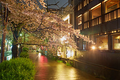 AI1A1767 (arcaswiss) Tags: city trees light red urban water colors zeiss season golden spring colorful nightshot cherryblossom 500 archetecture carlzeiss takaseriver variosonnar2485