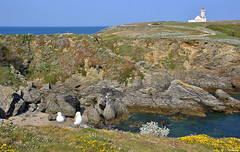 La Pointe du Poulain  Belle Ile en Mer (Isabelle Photographies) Tags: mer france ile bretagne belle pointe morbihan phare poulain