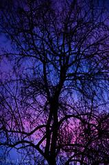 Human Soul #48 (TrojanHorsePictures) Tags: winter nature colors sunrise hike soul