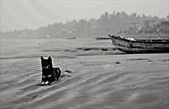 The Keeper (bishakha.chakraborty) Tags: sea blackandwhite dog seascape abandoned monochrome boat monochromatic blacknwhite blackandwhitephotography seabeach monochromephotography